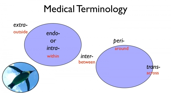 medical terminology quiz