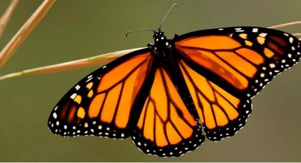 Monarchs Quiz