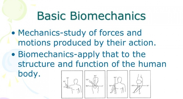 Biomechanics – the study of the mechanics of living beings Quiz