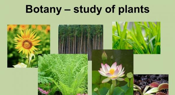 Botany – the study of plants Quiz