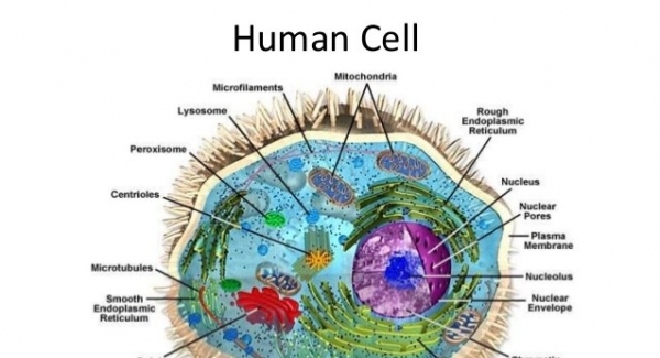 Cell biology – the study of the cell as a complete unit Quiz