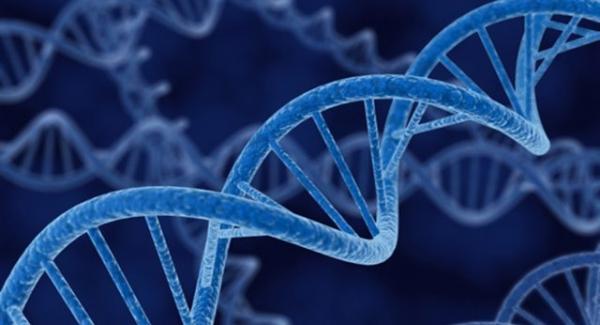 Genetics – the study of genes and heredity Quiz