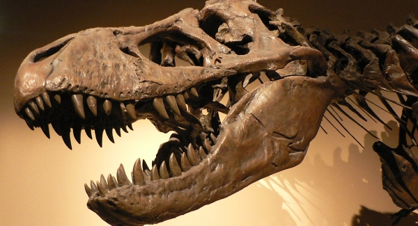 Paleontology – the study of fossils and sometimes geographic evidence Quiz
