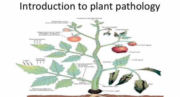 Phytopathology – the study of plant diseases (also called Plant Pathology) Quiz