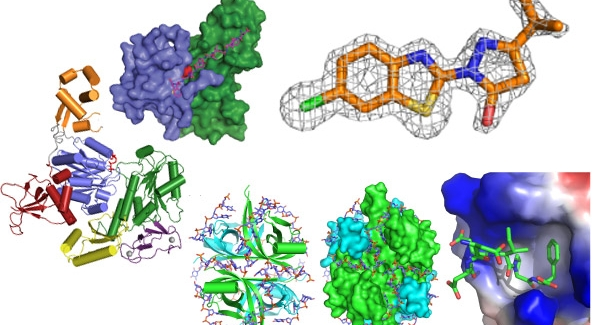 What are the main branches of molecular biology?