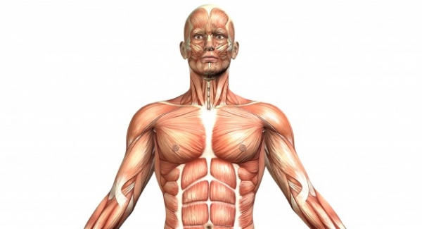 System of the Human Body Quiz | Anatomy and Physiology of the Human Body
