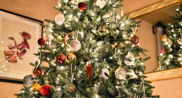 How many Christmas trees will you put up? Quiz | Christmas Tree