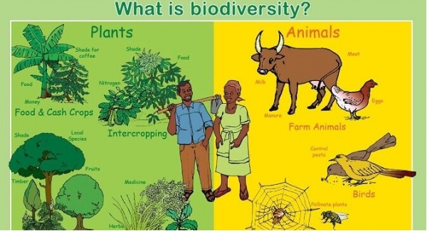 Biodiversity Quiz Test