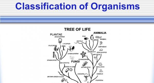 Classification of Organisms Quiz Test