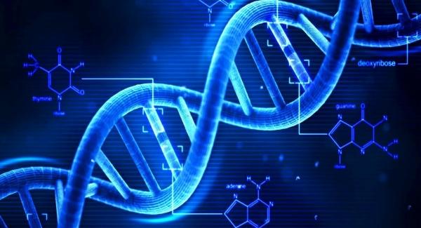 DNA Quiz Test