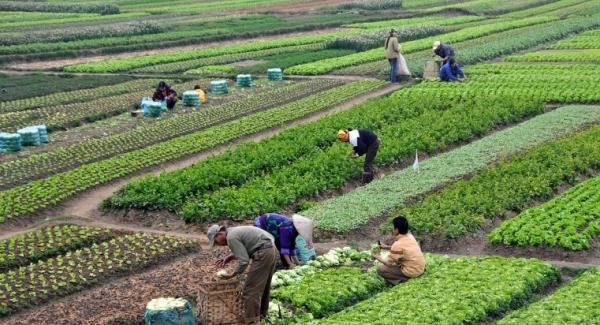 Intensive Farming and the Environment Quiz  | Quiz Questions