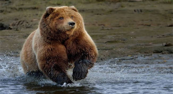 What kind of bear are you? Quiz