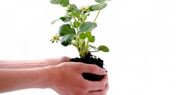 Plant developement Quiz