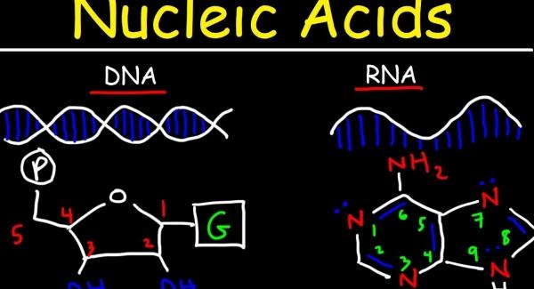Nucleic Acids Quiz