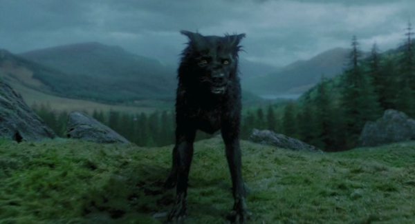What Would Your Animagus Animal Be? Harry Potter