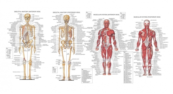 Anatomy Quiz Biology