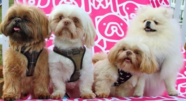 Do you know about dog breed?