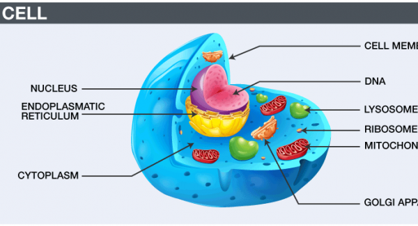 Structure of a Cell Quiz