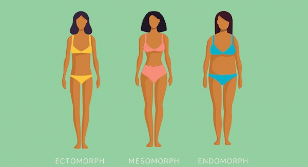 am i an endomorph